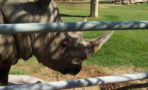 MW - Rhino Reid Park