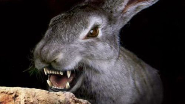 A deranged giant rabbit from the cult classic Night of the Lepus filmed in Colossal Cave.