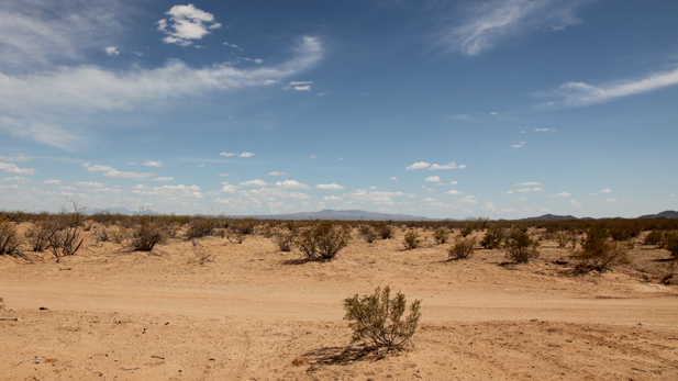 Arizona desert in Tucson's sector of the Border Patrol