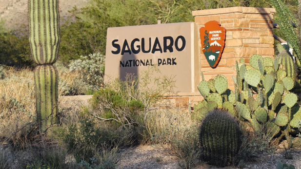 Saguaro National Park East - Stock Spotlight