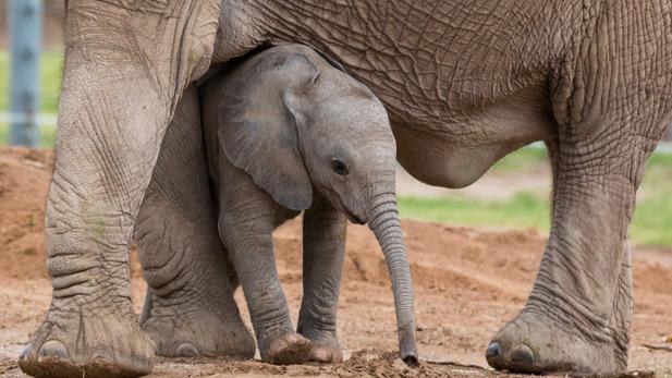 baby elephant Reid Park Zoo