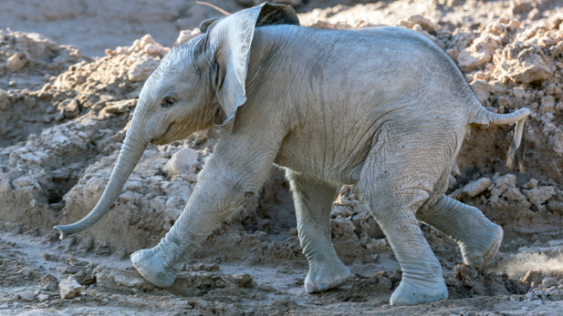 Baby Elephant Reid Park Zoo SPOT 2
