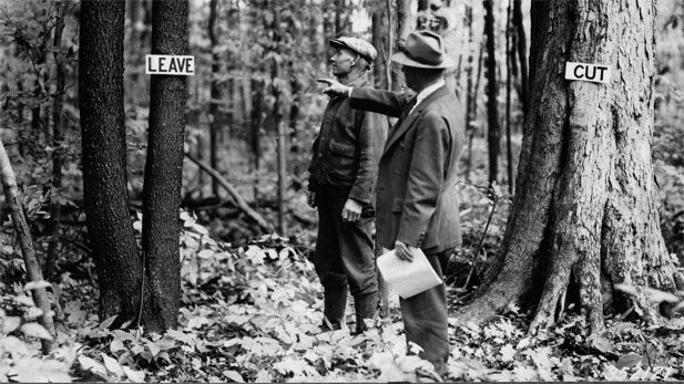 Forest management: one man shows another man which tree to cut and which to leave.