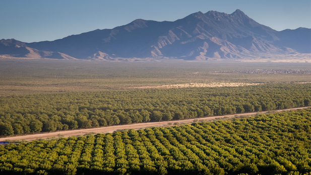 Farmers Investment Co. pecan orchards at Sahuarita, south of Tucson