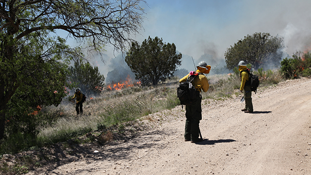 Members of the Globe Hotshots work a controlled burn near Reddington Pass in May of 2015. The Bureau of Land Management will form a similar crew and stationed it at Ft. Huachuca for the 2016 fire season.