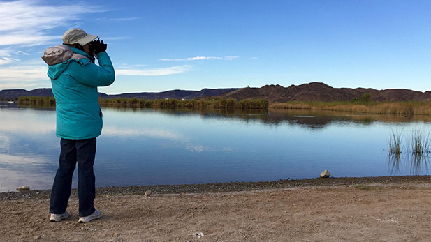 Nancy Meister, president of the Yuma Audubon Society, leads a Christmas Bird Count team near Imperial Dam.
