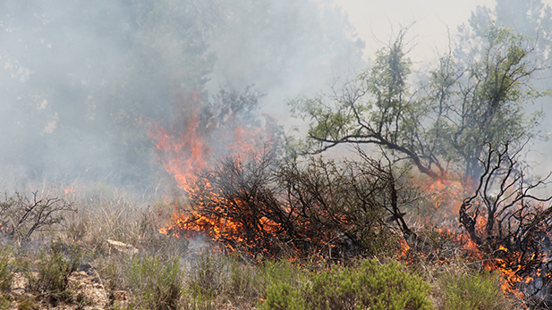 'Fire does have a role in natural landscapes.' - Coronado National Forest Spokesperson Heidi Schewel