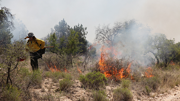 An April 29, 2015 controlled burn near Redington Pass in the Coronado National Forest.