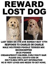 Charlie dog poster portrait