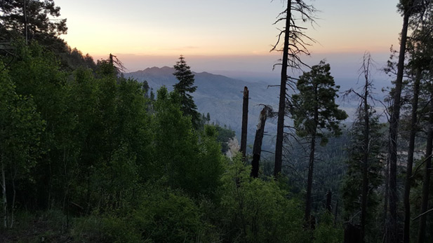 Sunset on Mt. Lemmon in the Coronado National Forest.