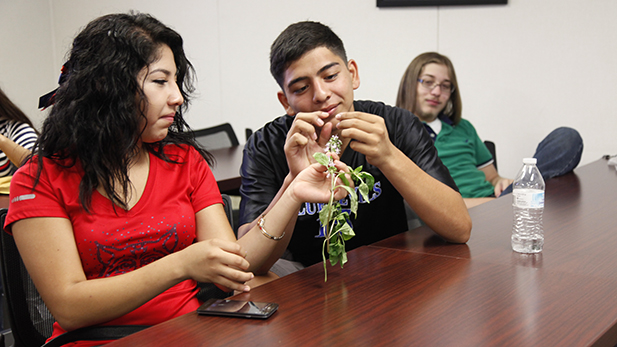 Jacqueline Avila Robledo,18,  and Fernando Mancilla,17, sample basil flowers in their Agri-SURF class. At the end of the program they will have earned three college credits for free.