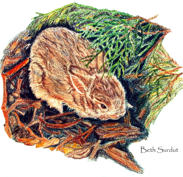 baby bunny portrait by beth surdut