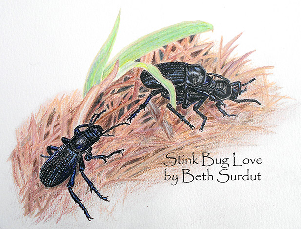 Stinkbug Love, Beth Surdut unsized