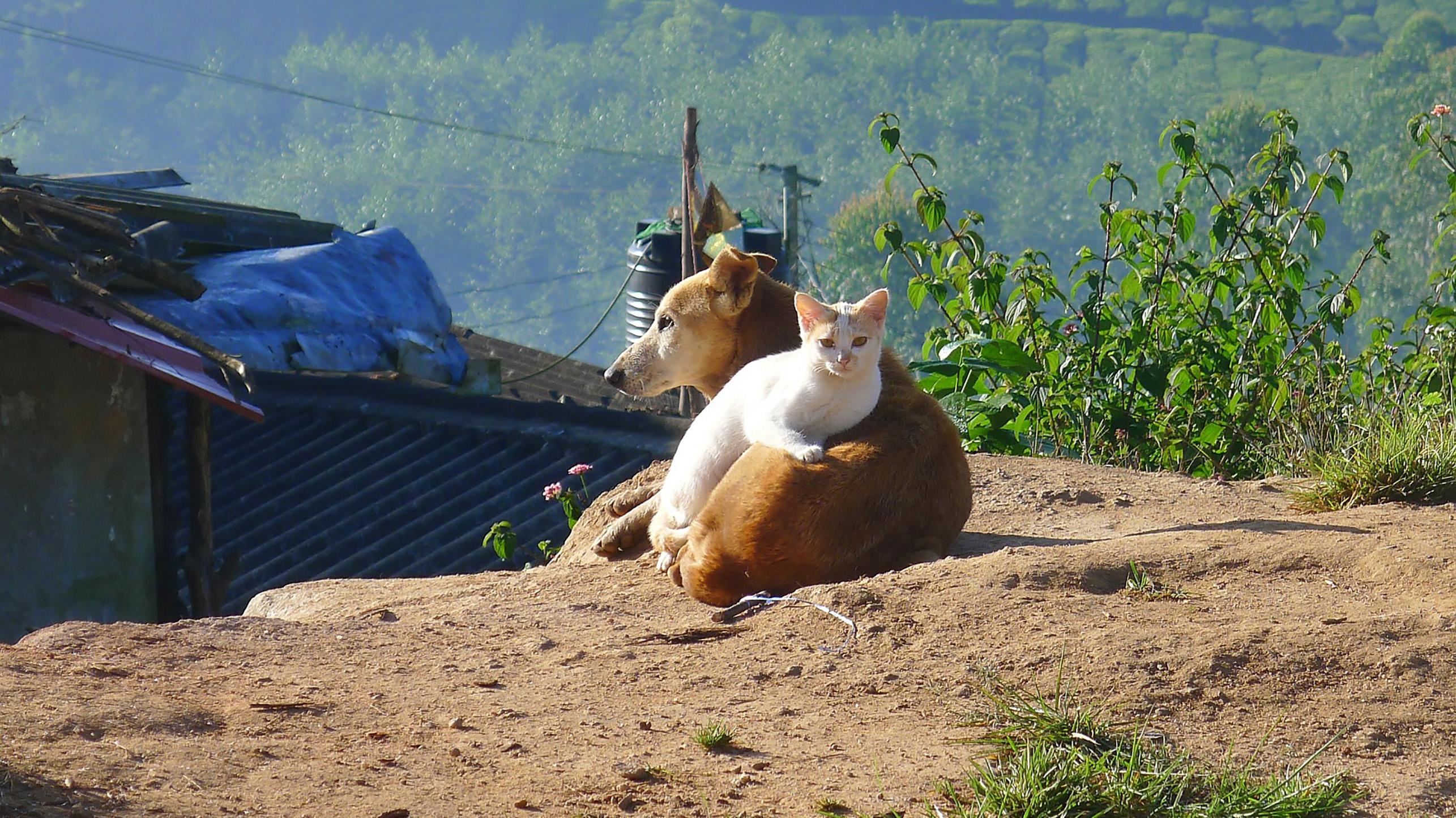 Keep pets chill during monsoon season