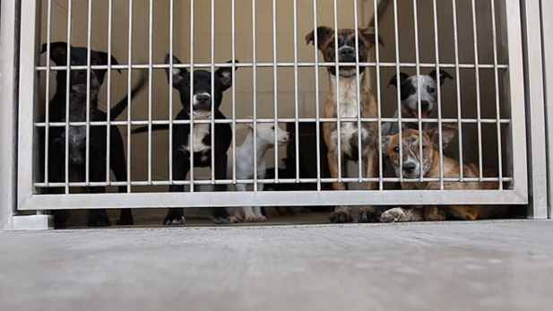 Puppies at Pima Animal Care Center July 8, 2015.