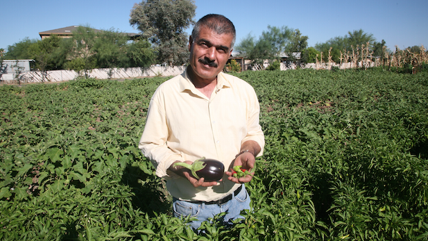 Iraqi refugee Hussein Alhamka, who with his wife Shreena and their 12 children, grow more than 20 types of fruits and vegetables for sale.