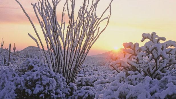"""A wintry desert scene from, """"Desert Dreams: Four Seasons in the Sonoran Desert."""""""
