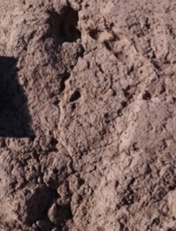 One of the footprints discovered at a road project site.