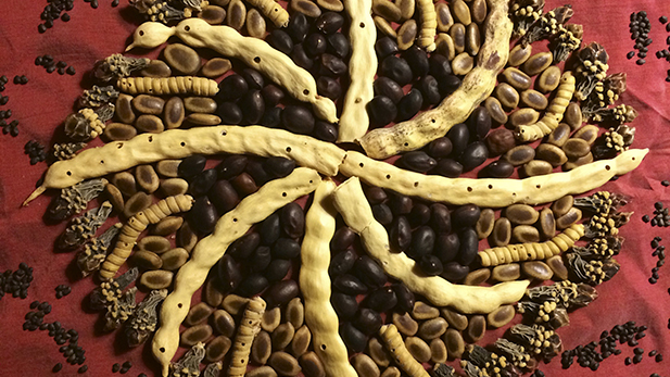 There are 400 wild, edible native foods in the Sonoran Desert. This food mandala is made from mesquite, ironwood, cholla cactus buds and cactus seeds.
