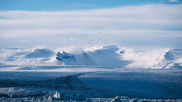 Birds circle above a glacier.
