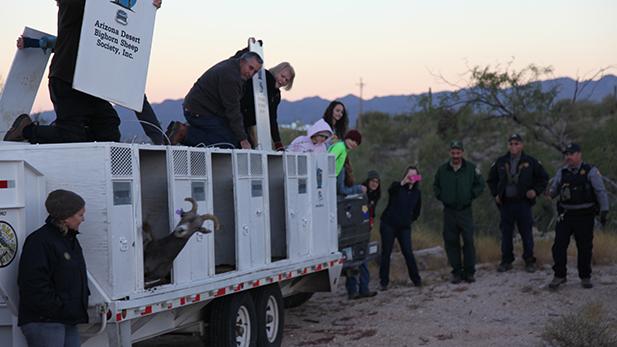 Bighorn Catalina Release 1