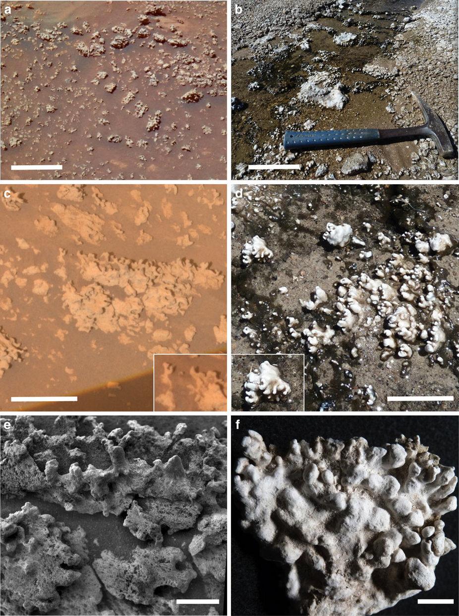Silica life on Mars 2