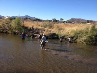 Scientists collect fish for the annual Santa Cruz River count.