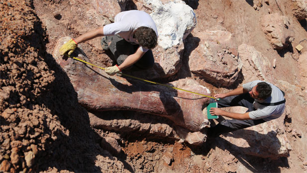Dr. Jose Luis Carballido (right) and Dr. Diego Pol (left) measure the femur bone of a new giant titanosaur find at the dig site on La Fletcha Farm near Trelew, Chubut Province, Argentina, April 2015.