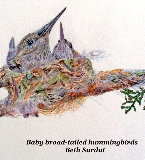 beth surdut hummingbirds unsized body image