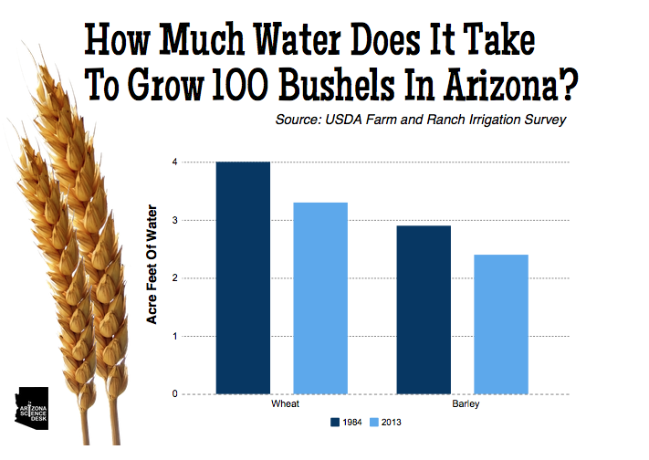 Wheat water use chart spotlight