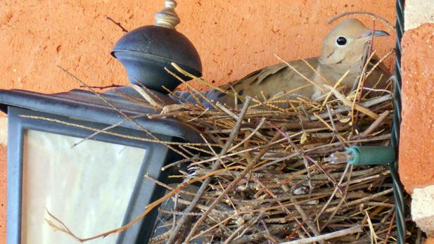 beth surdut dove next on porch spotlight