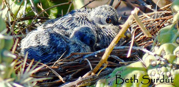 beth surdut baby dove nest photo unsized