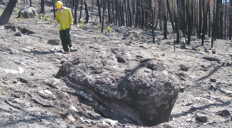 University of Arizona geosciences professor Jon Pelletier walks through the forest on Cerro del Medio, a mountain in New Mexico's Valles Grande, after the 2011 Las Conchas fire.