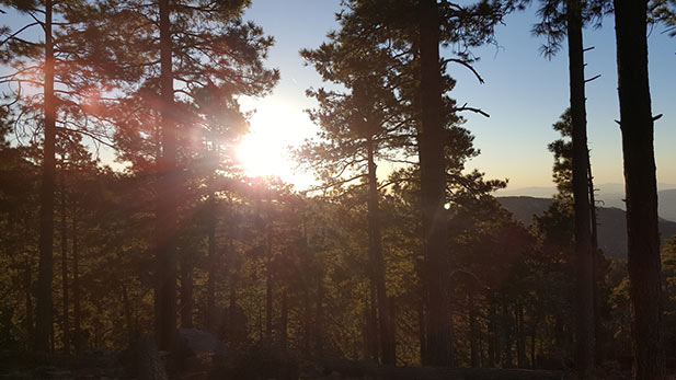 The sun rises through the trees in the Coronado National Forest.