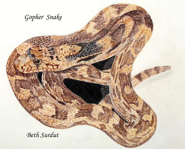 beth surdut snake drawing unsized image