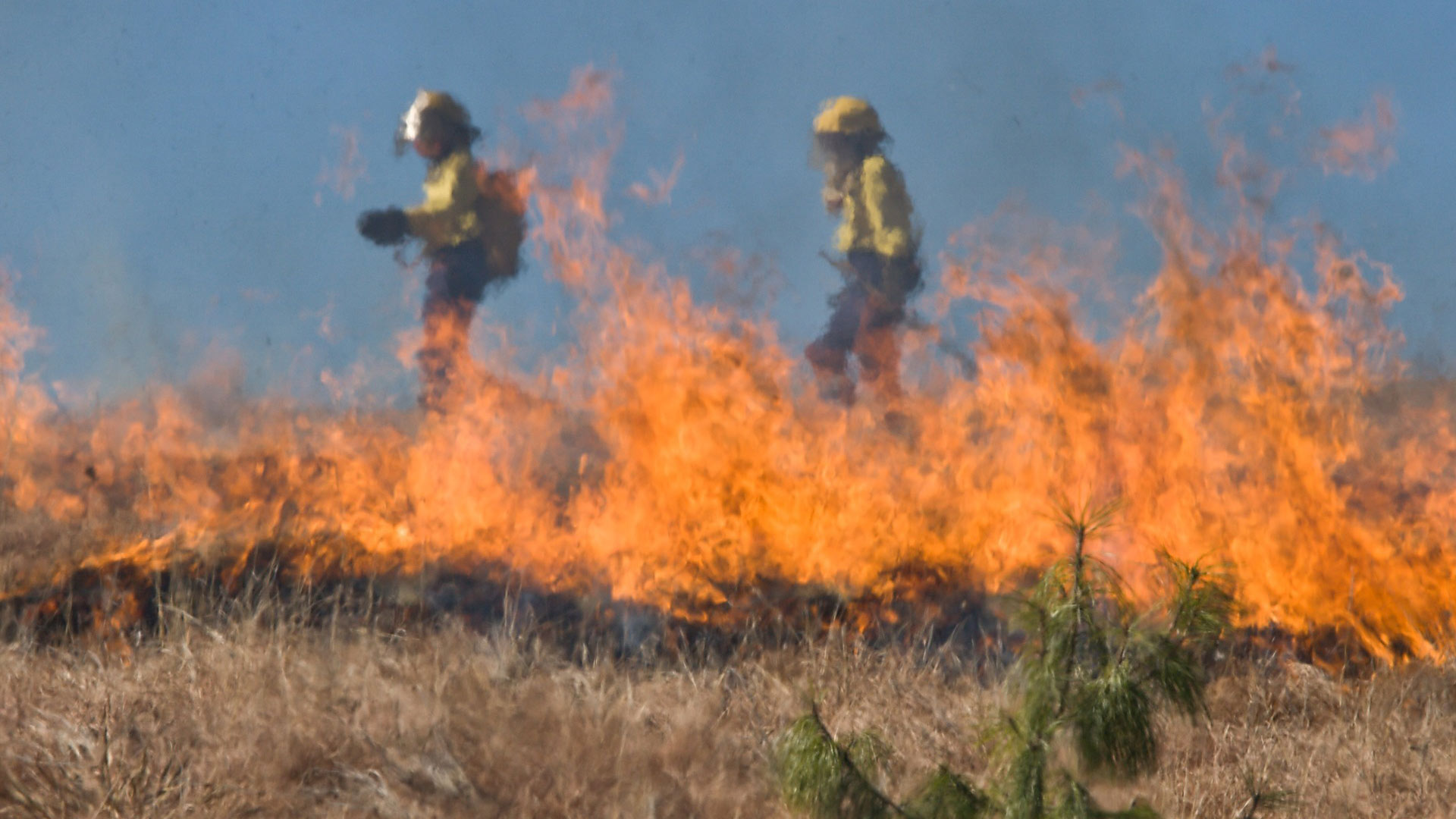 Firefighters monitor a preventive burn.