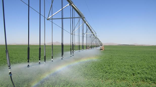 Ak-chin cotton irrigation spotlight