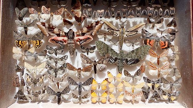 A collection of moths.
