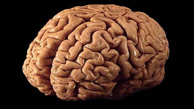 Human Brain spot