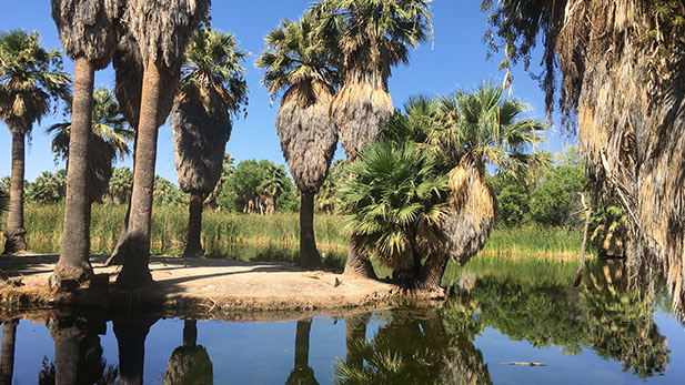Agua Caliente Park Pond 1 spotlight
