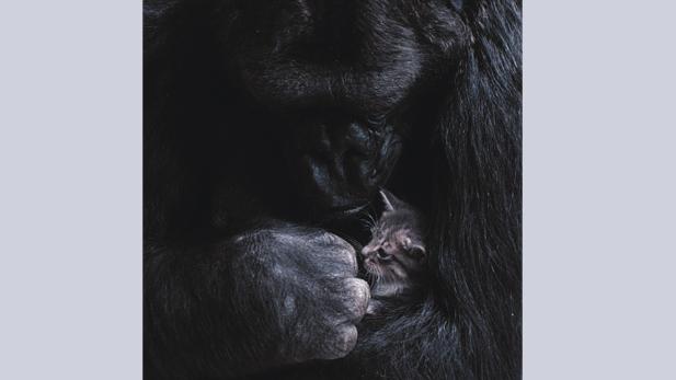 Koko holding kitten