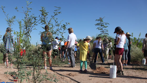 Volunteers contribute time & effort to one of Tucson Clean & Beautiful's many tree planting campaigns.