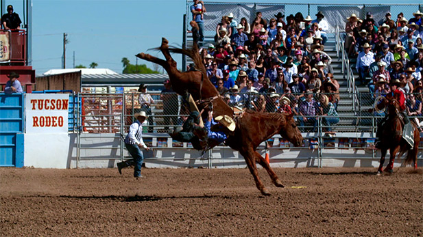 A rodeo cowboy is bucked off a horse.