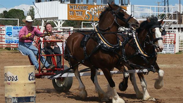 Sonoita Rodeo Horses