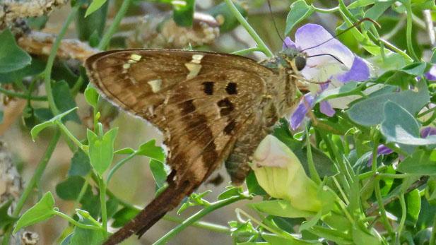 ebutterfly spotlight 2