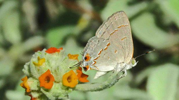 ebutterfly spotlight 3