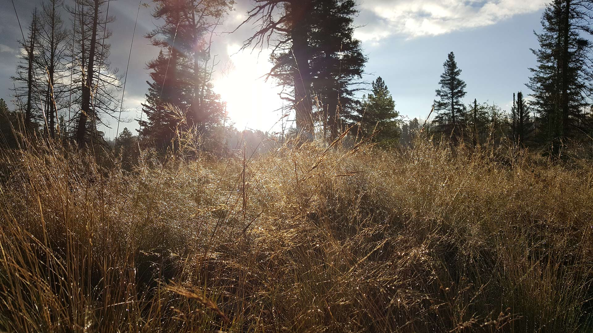 The sun rises over a grassy meadow in the White Mountains of Arizona.