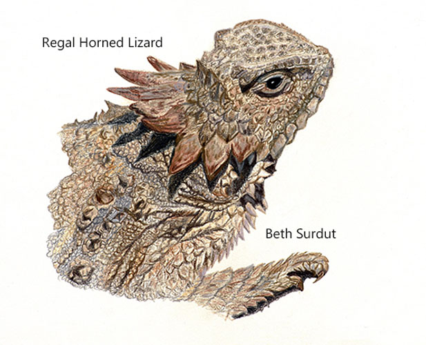 regal lizard by beth surdut unsized image
