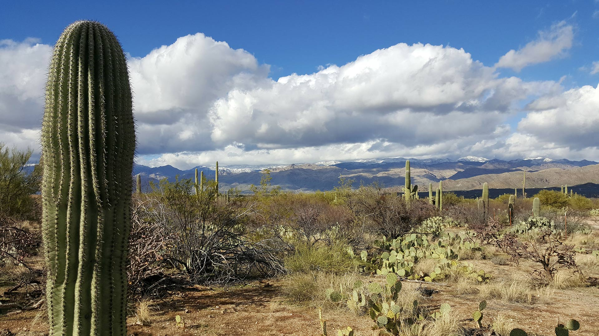 The Catalina Mountains are dusted with snow in the background of this desert photo.
