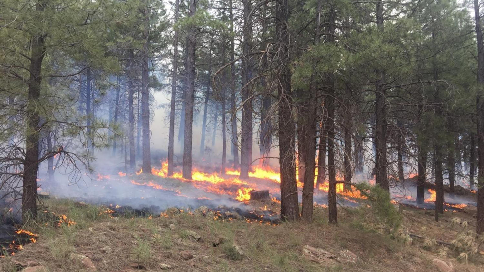 The U.S. Forest Service allowed fire to burn more than 73,500 acres in northern Arizona last year.